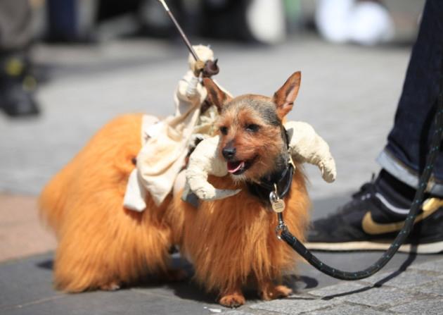 SCI FIDO   SCI-FI-LONDON   DOG SHOW