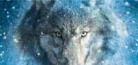 Wolfs Angel by M.D. Lachlan